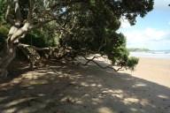 Zatoka wysp_Bay if Island (4)