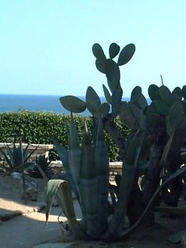 kaktusy Marii