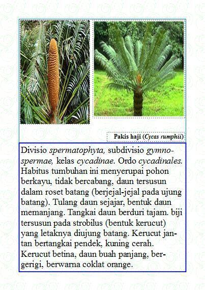 Contoh Tanaman Berbiji Terbuka : contoh, tanaman, berbiji, terbuka, SILABUS, (KelasEksperimen), Download, Gratis