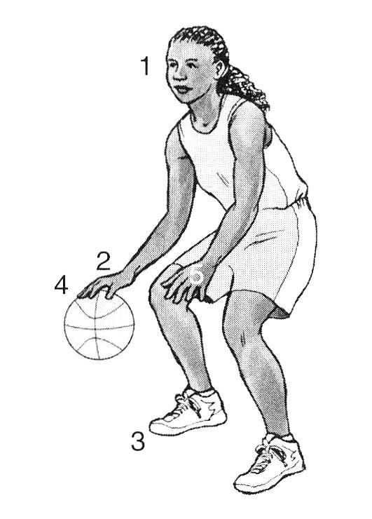 Cara Dribble Bola Basket : dribble, basket, Teknik, Dasar, Permainan, Basket, Beserta, Gambarnya, Download