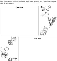 draw a diagram of your plants and label each part  [ 960 x 1336 Pixel ]