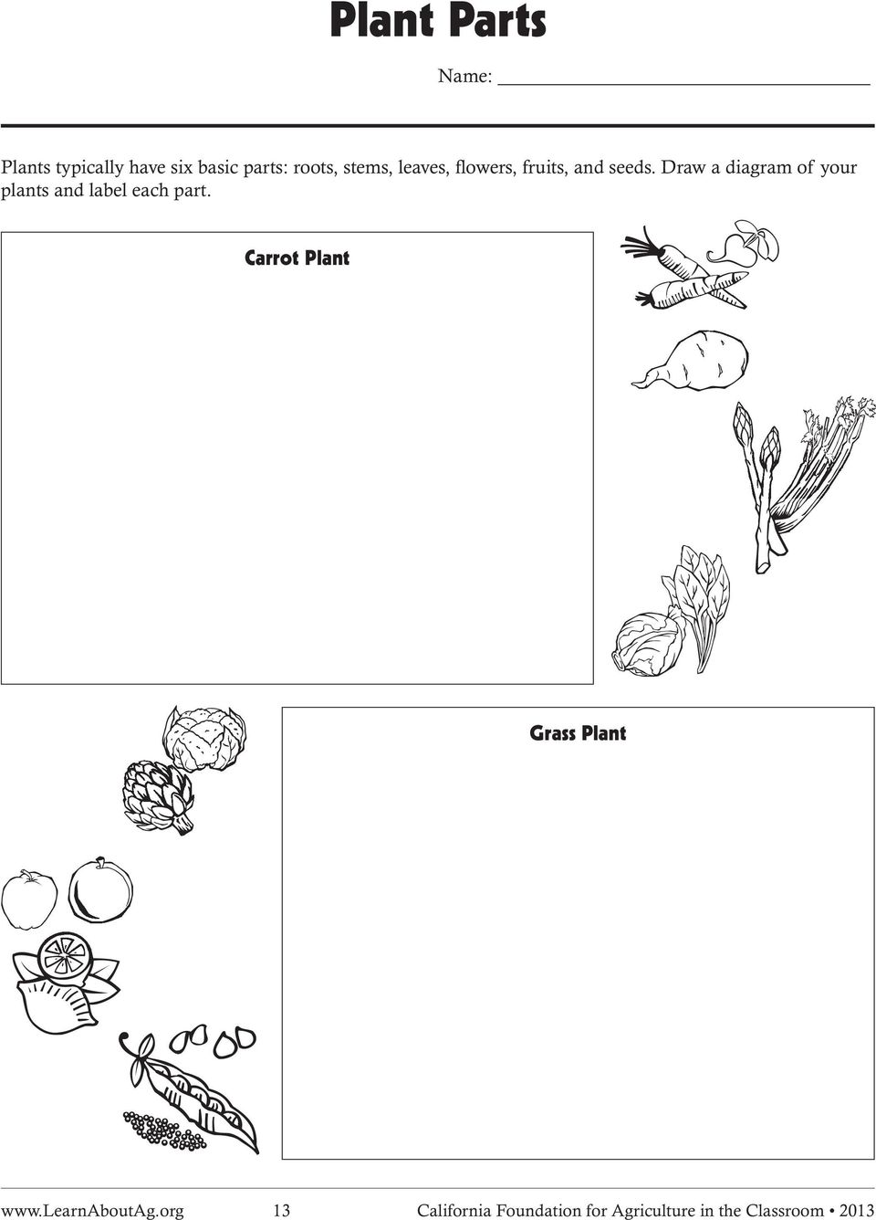 medium resolution of draw a diagram of your plants and label each part