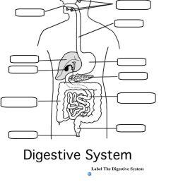 Magic School Bus Digestive System Brainpop Digestive System - PDF Free  Download [ 1347 x 960 Pixel ]