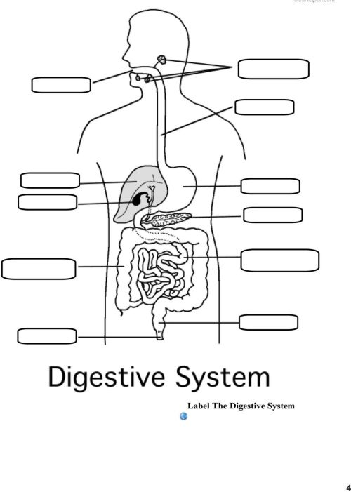 small resolution of Magic School Bus Digestive System Brainpop Digestive System - PDF Free  Download