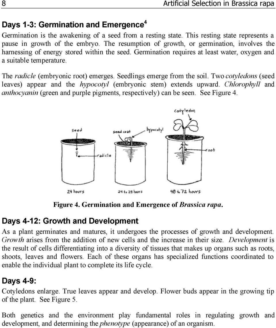 medium resolution of Artificial Selection in Brassica rapa - PDF Free Download