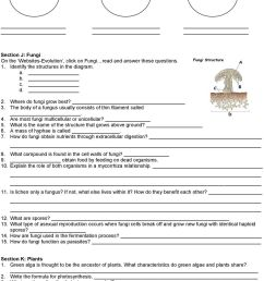Classification \u0026 Kingdoms Worksheet - PDF Free Download [ 1279 x 960 Pixel ]