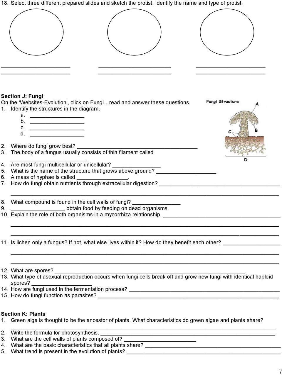 hight resolution of Classification \u0026 Kingdoms Worksheet - PDF Free Download