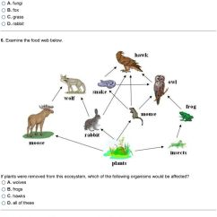 Savanna Animal Food Chain Diagram 24vdc Alternator Wiring Hawk Web Great Installation Of The Animals At Higher Levels Are More Competitive So Fewer Rh Docplayer Net Mouse Wolves