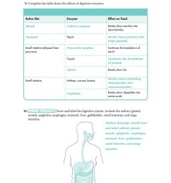 30.3 The Digestive System - PDF Free Download [ 1237 x 960 Pixel ]