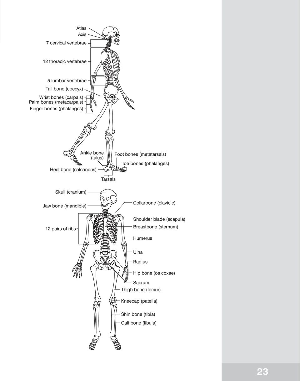 Unit 2. The skeletal system. In this unit. Warm-up