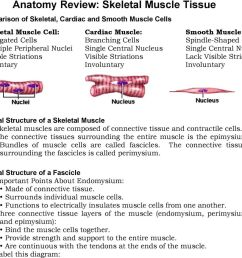 skeletal muscle skeletal muscles are composed of connective tissue and contractile cells the connective tissues [ 960 x 867 Pixel ]