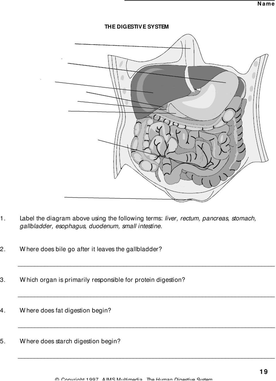 medium resolution of gallbladder esophagus duodenum small intestine 2