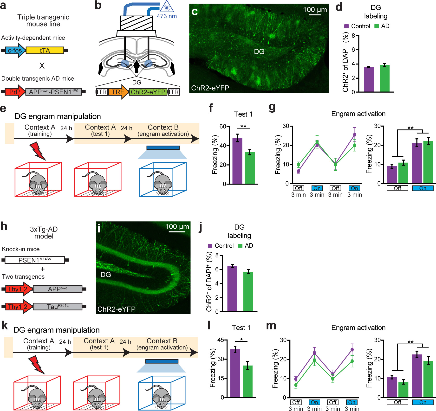 hight resolution of research letter extended data figure 4 engram activation restores fear memory in triple transgenic and
