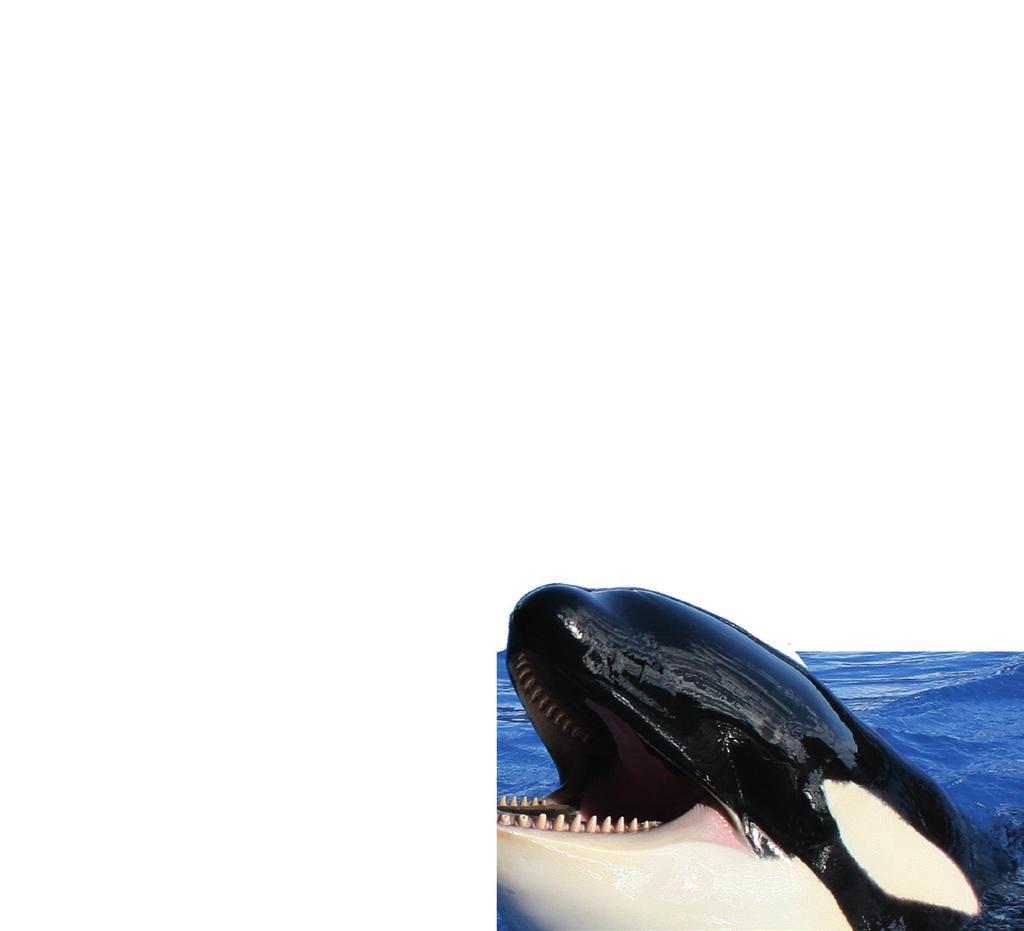 Orcas In Gefangenschaft - Pdf