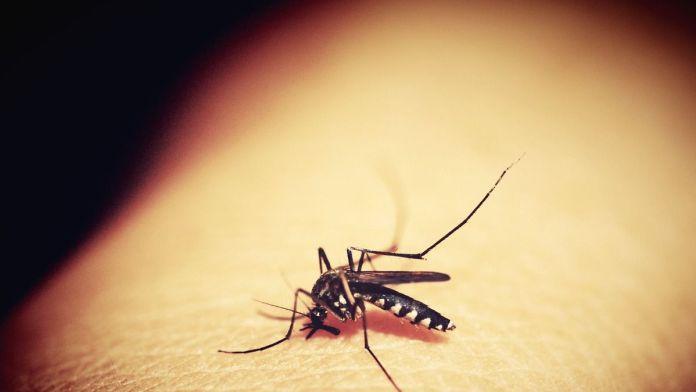 Un experimento con mosquitos transmisores del dengue auguran terminar con la enfermedad (Foto: Pixabay)