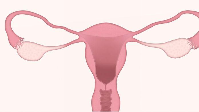 Cómo detectar enfermedades ginecológicas en menopausia (Foto: Pixabay)
