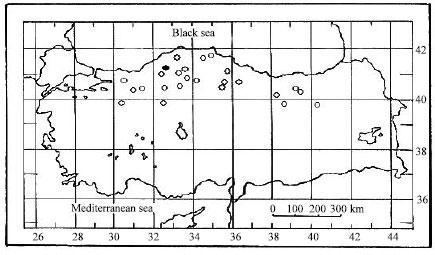 Wood Anatomy of Crataegus tanacetifolia (Lam.) Pers