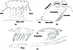 Science Students' Misconceptions of the Water Cycle