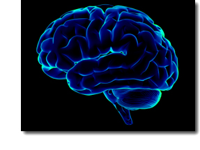 why the brain is wrinkled