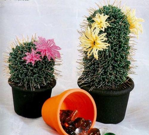 kaktus-500x452