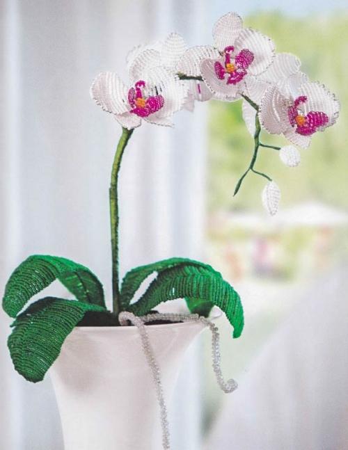 orhideya-500x647