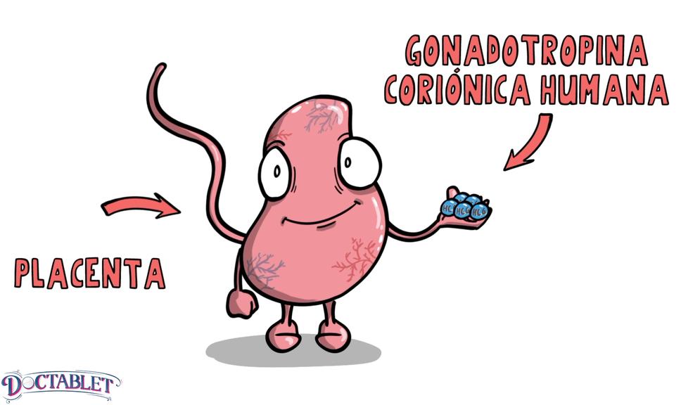 Qué es la HCG, una hormona llamada Gonadotropina Coriónica Humana