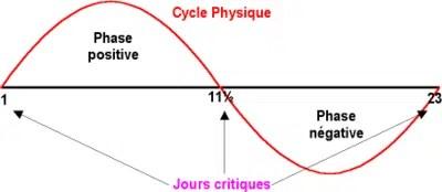 biorythme comprendre la biorythmie