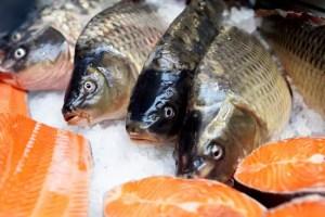 saumon norvegien dangereux sante