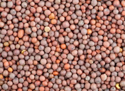 moutarde grains