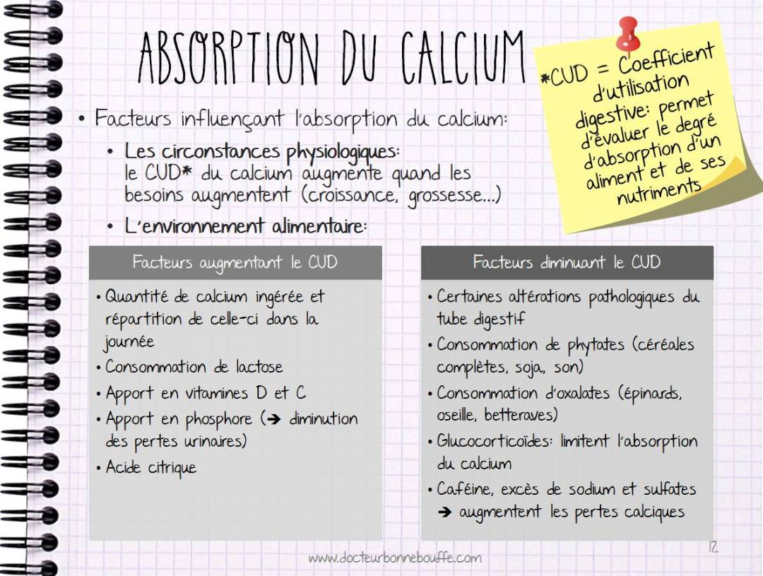 Facteurs d'absorption du calcium