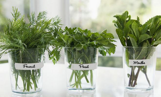 herbes aromatiques fenouil persil menthe