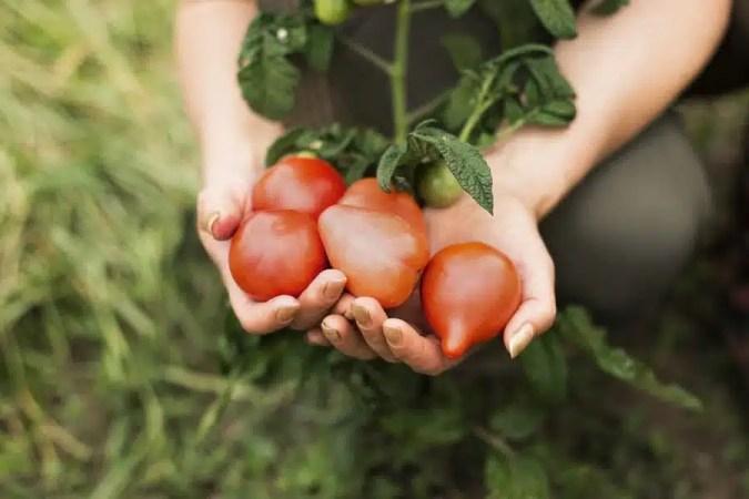 fruits et légumes locaux goût