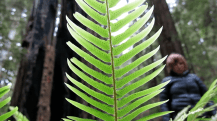 Architectural beauty of fronds make me smile from any perspective.