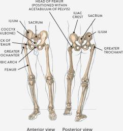 skeletal diagram [ 1360 x 1358 Pixel ]