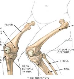 the tibia or shin bone is the second largest bone in the body after the femur at its upper frontal region are the medial and lateral condyles of the  [ 1431 x 1194 Pixel ]