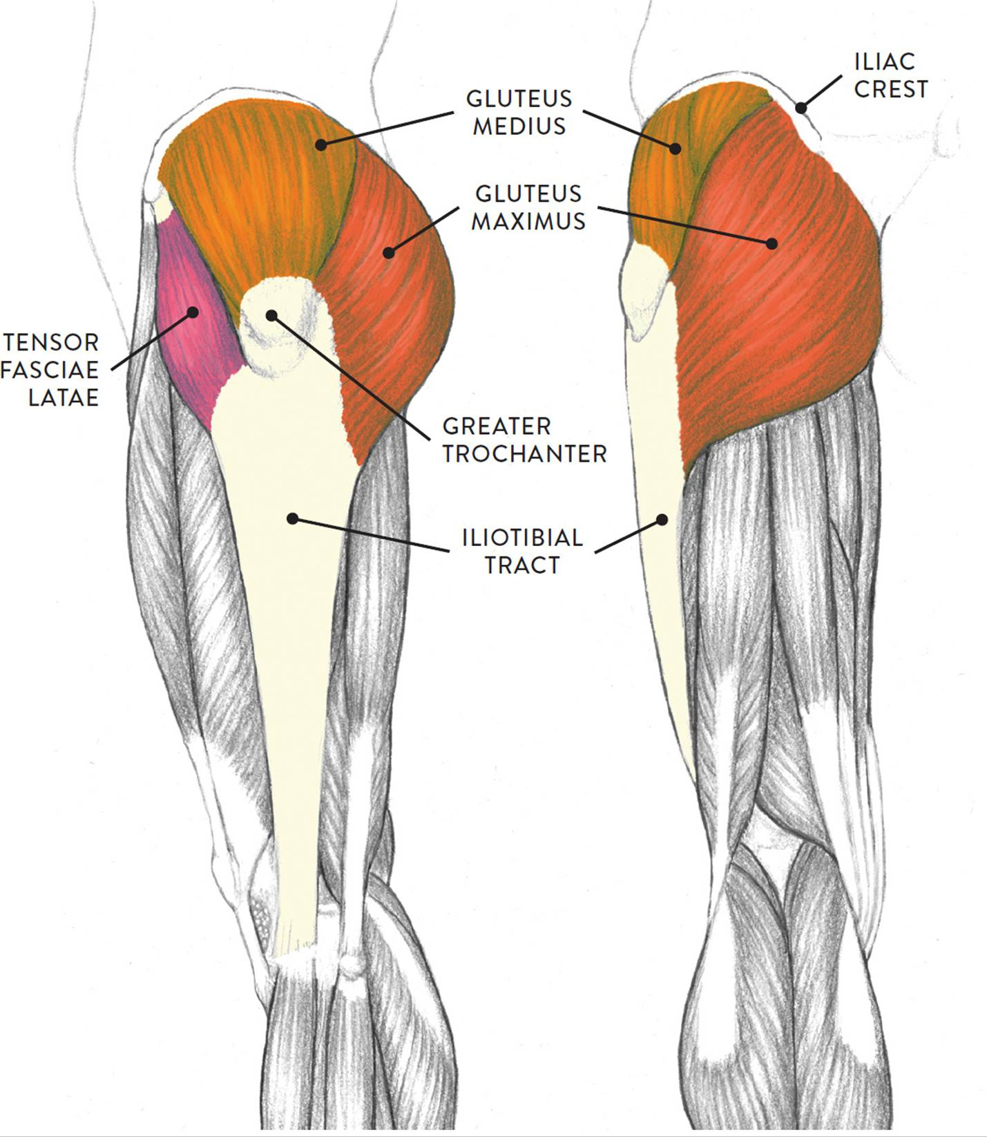 hight resolution of left leg lateral left and posterior right views