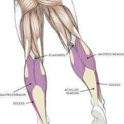 Medial Lower Leg Muscles Diagram 2005 Kia Spectra5 Radio Wiring Of The And Foot Classic Human Anatomy In