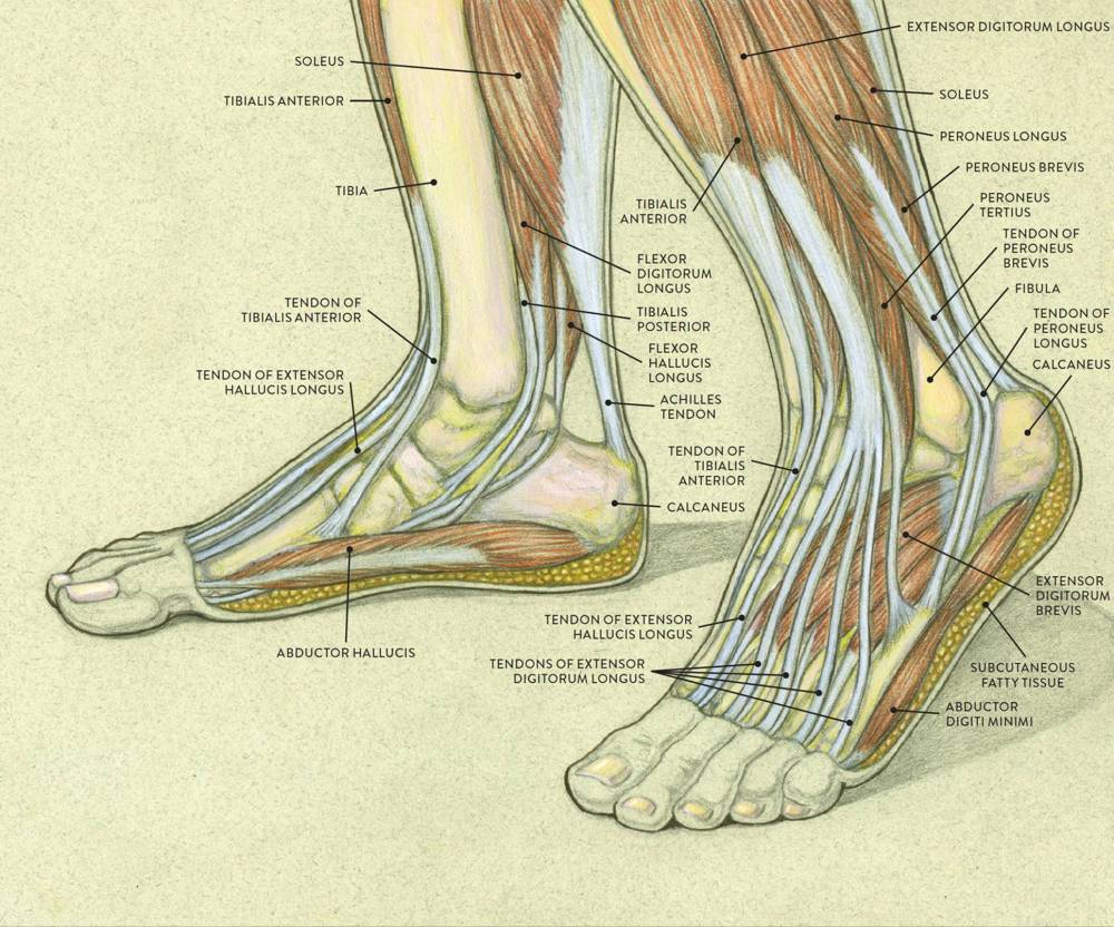 medium resolution of left medial inner side view of right foot