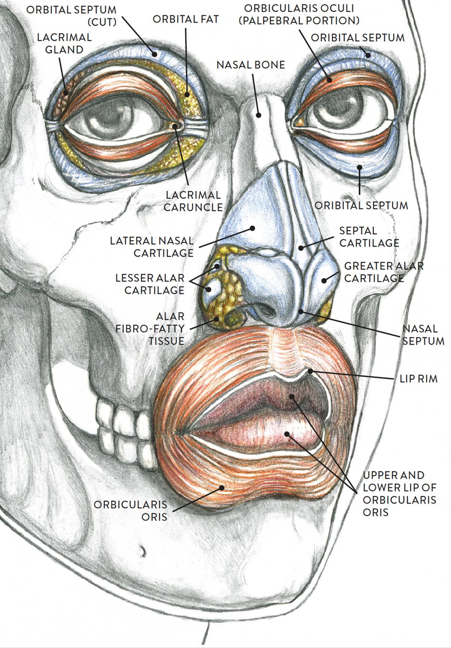 hight resolution of anatomical study