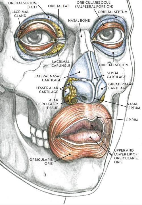 small resolution of anatomical study