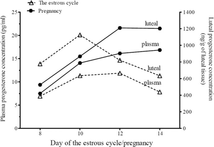 Corpus Luteum Regression and Early Pregnancy Maintenance