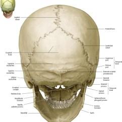 Unlabeled Skull Diagram Inferior View 1994 Honda Prelude Radio Wiring Bones Of The Head - Atlas Anatomy