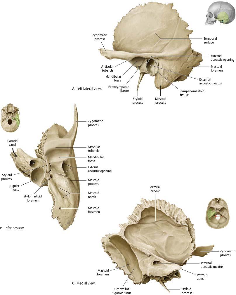 medium resolution of atlas of anatomy 35 temporal bone ear