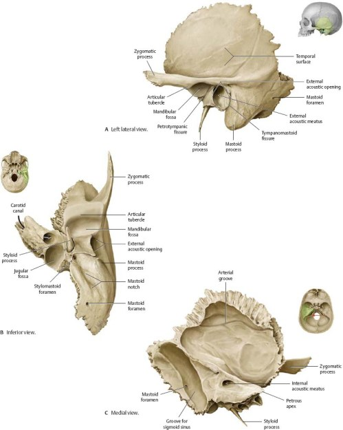 small resolution of atlas of anatomy