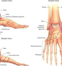 the foot has three general parts the hindfoot calcaneus and talus the midfoot navicular cuboid and cuneiforms and the forefoot metatarsals and  [ 1190 x 871 Pixel ]