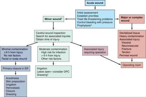 small resolution of figure 47 1 algorithm for the treatment of an acute wound aappropriate tetanus rabies and antibiotic prophylaxis bintermediate risk wounds require more
