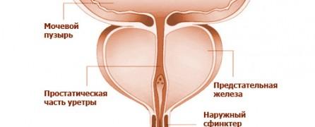 A here, a mellékhere és a prosztata gyulladása