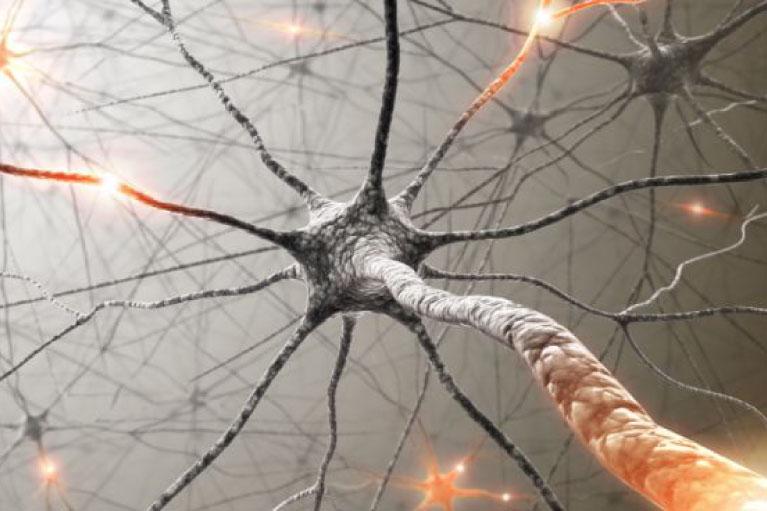 Brain Neuron photo