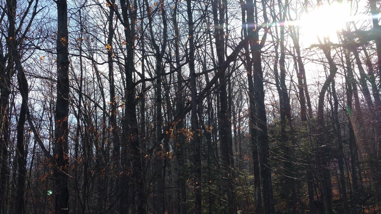 Vermont's Gray Season