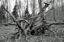Forest art - Waldkunst I_1
